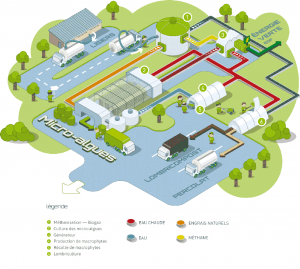 LDC Algae – Une ferme géante de micro-algues de 32 ha en construction en Bretagne