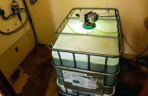 Des microalgues dans l'eau de boisson des pondeuses